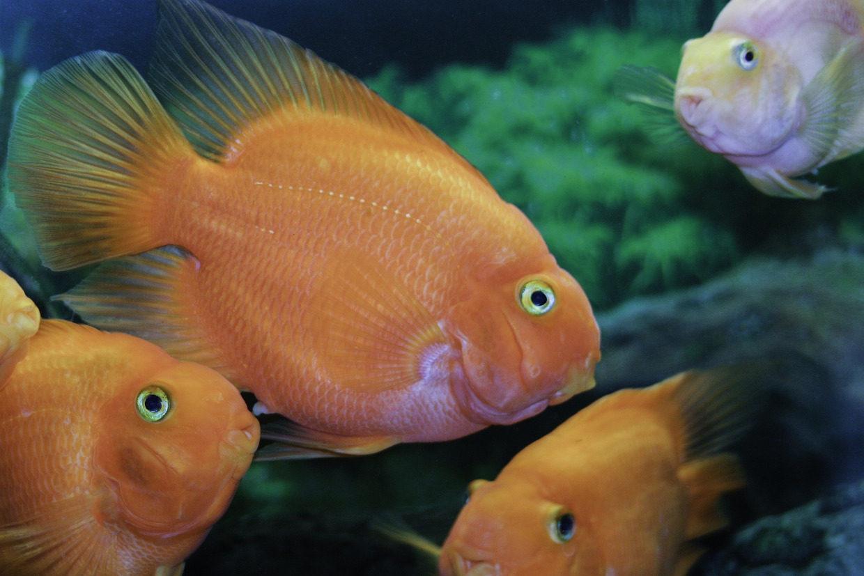 fish-975713_1920